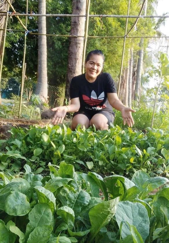 Thai Government Launches Plant Based Urban Gardening Movement