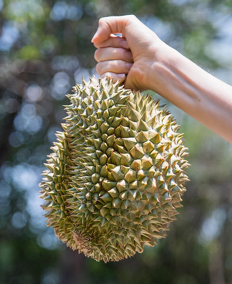 Researchers Turn Durian Skin Into Sustainable Energy Storage