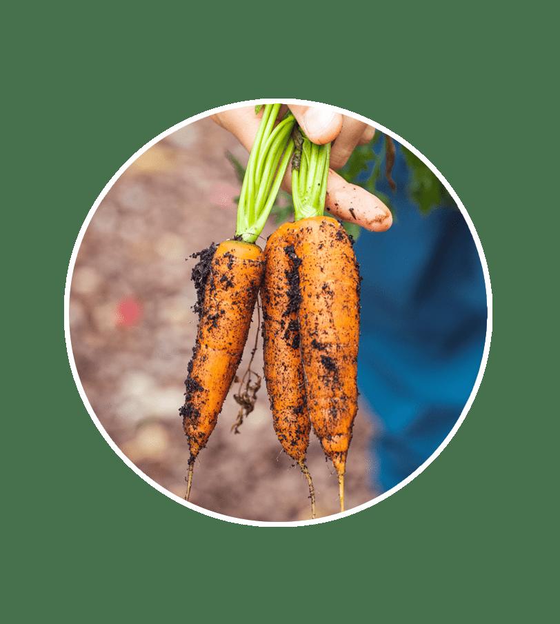 Support Organic Farmers