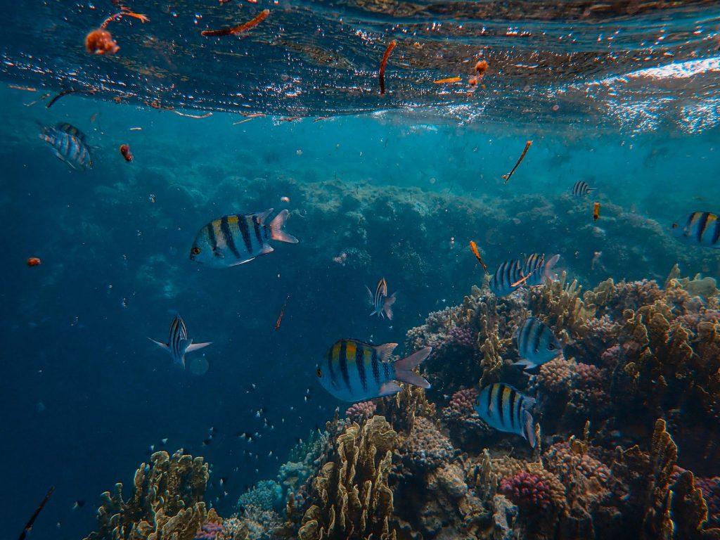 tropical sealife