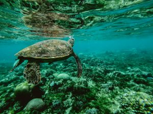 Andaman Sea Turtle