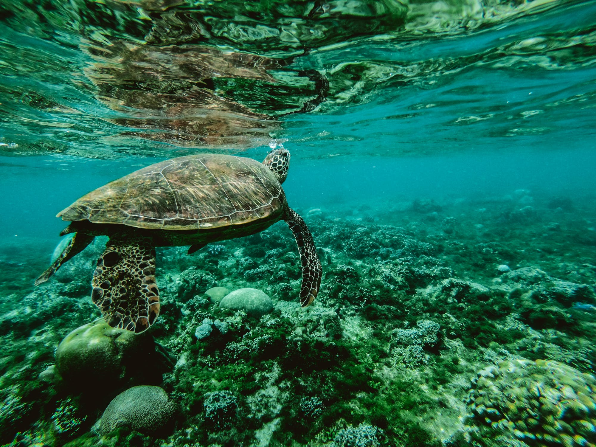 Andaman Sea Turtle