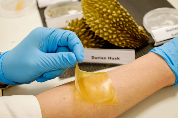 Biodegradable Durian Skin Bandage